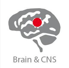 CCRP Brain & CNS