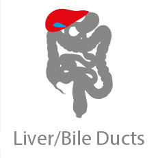 CCRP Liver/Bile Ducts