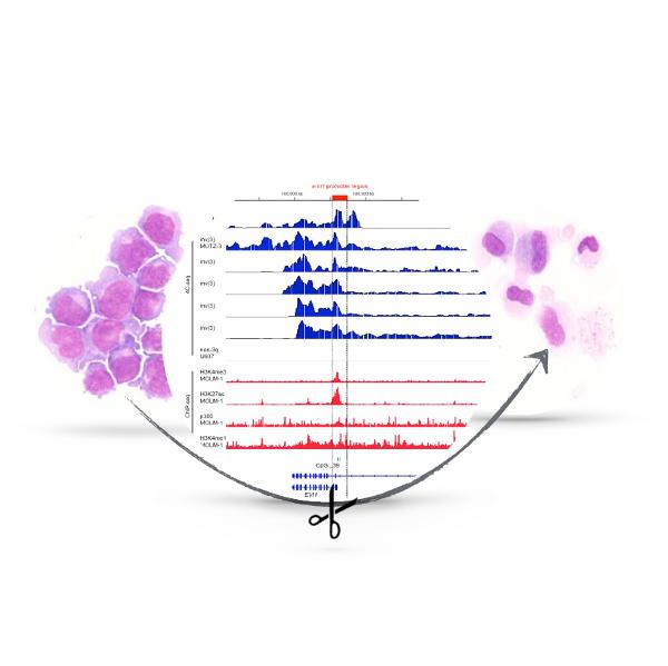 Molecular Leukemogenesis