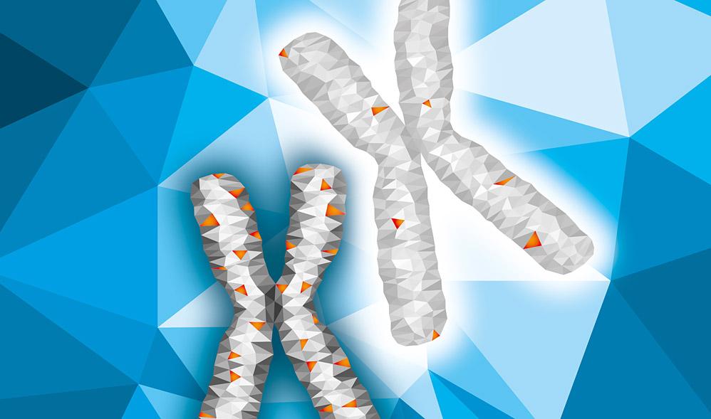 phenomenon of X chromosome hypermutation