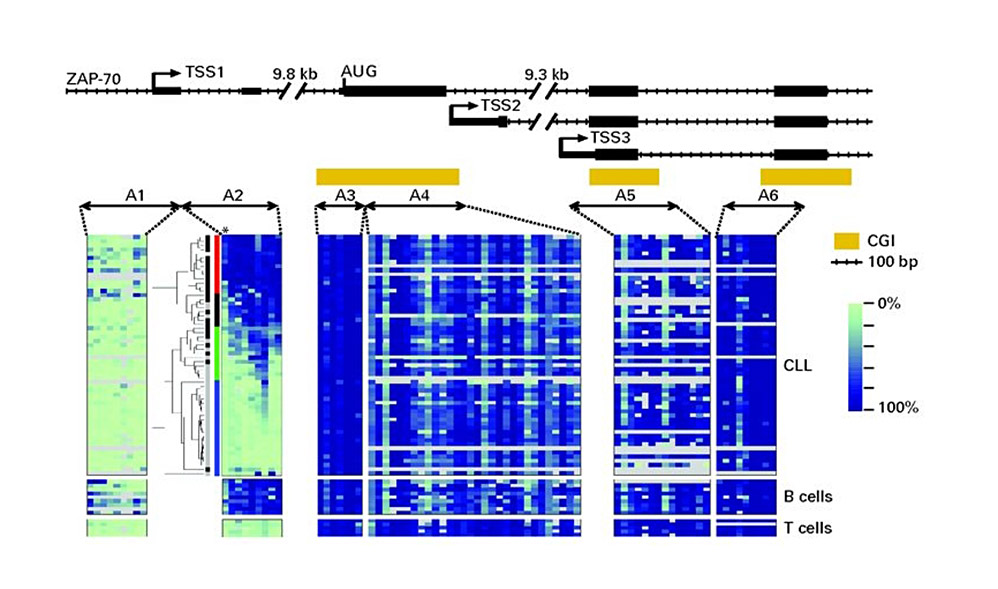 Comprehensive quantitative DNA methylation profiling of CpG-rich regions